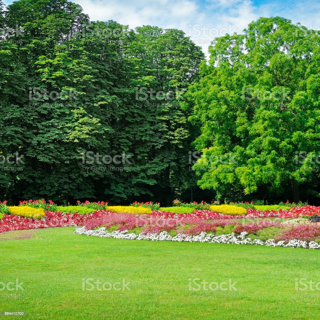 Summer Park With Beautiful Flower Beds Stock Photo More Pictures