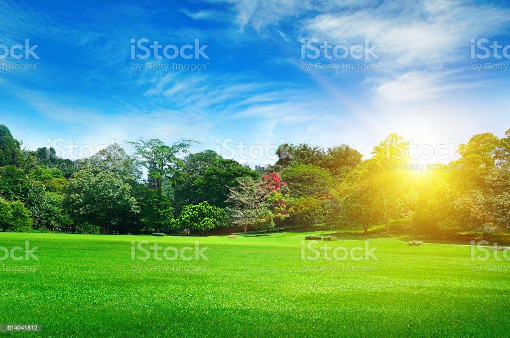 Parco estivo con splendidi prati verde - foto stock