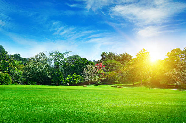 summer park with beautiful green lawns stock photo