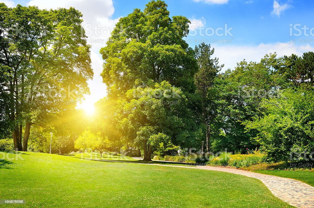 summer park with green lawns stock photo