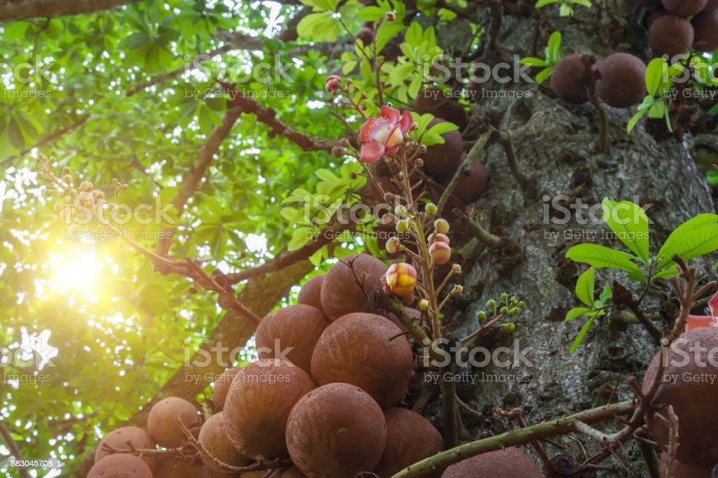 Parque con árboles centenarios en el sol de la mañana en verano. - foto de stock