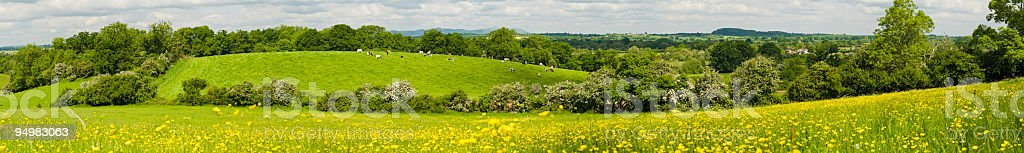 Summer pastoral panorama royalty-free stock photo