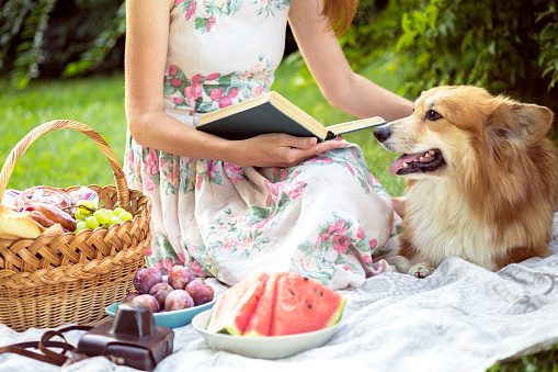 istock Summer - picnic in the meadow.  girl sitting reading a book and near a picnic basket and baguette, wine, glasses, grapes and dog corgi