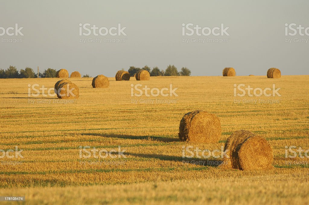 summer royalty-free stock photo