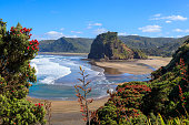 Summer Piha beach and Lion Rock with pohutukawa tree flowering, New Zealand