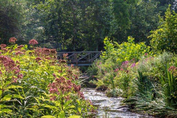 Summer plants in bloom near a stream stock photo