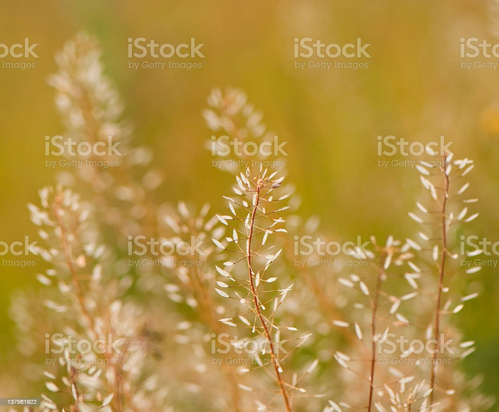 summer plants stock photo