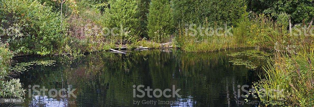 Summer Pond Panorama royalty-free stock photo