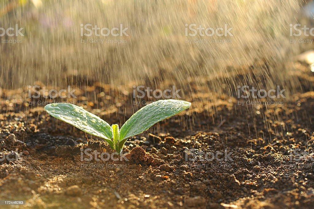 Summer rain royalty-free stock photo