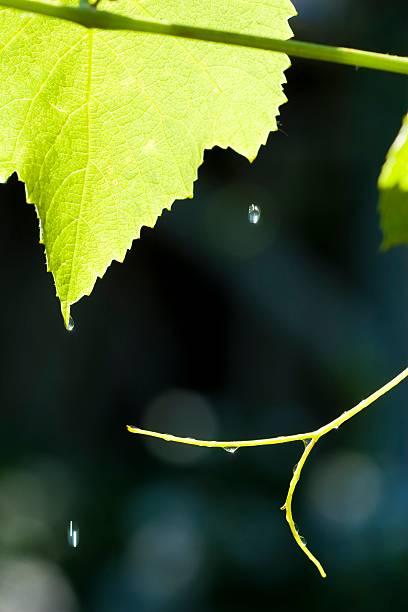 Sommer-Regen – Foto
