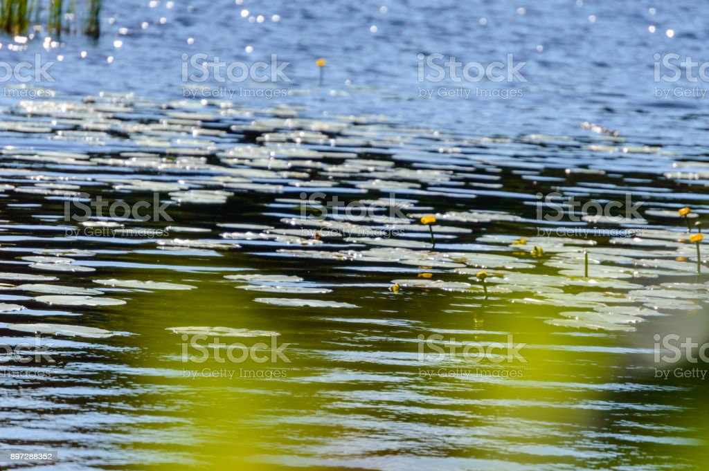 summer reflections in calm water stock photo