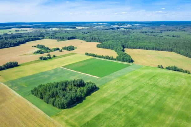 Summer rural landscape. stock photo