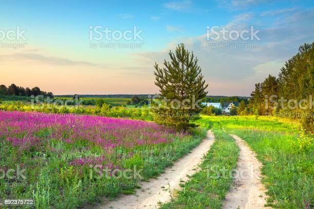Summer rural landscape with a blossoming meadow road and a farm picture id892375722?b=1&k=6&m=892375722&s=612x612&h=hqcw ovgywsbg7y8bdnluke8dv1olhdvponxkacdtya=