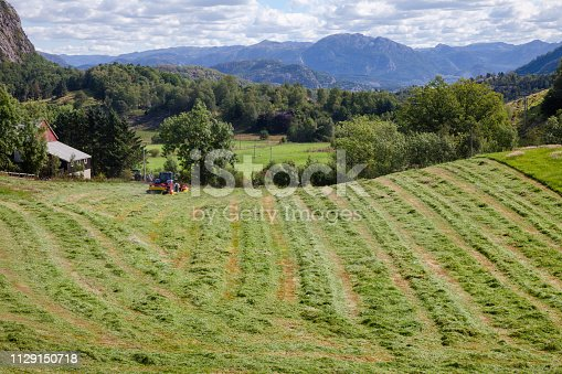 Norwegian rural landscape with tractor making windrows of freshly cut hay to dry before being baled Norway Scandinavia