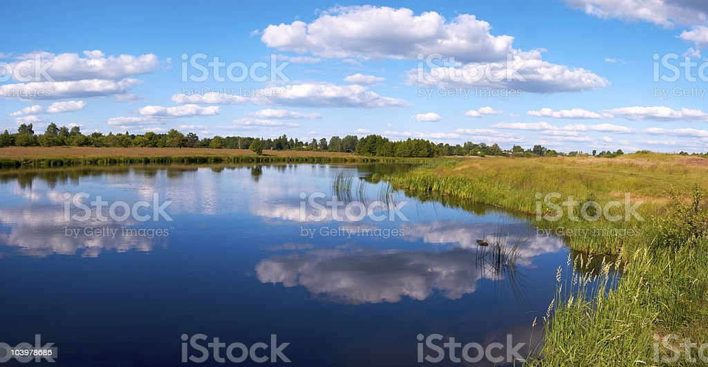 Summer rushy lake panorama royalty-free stock photo