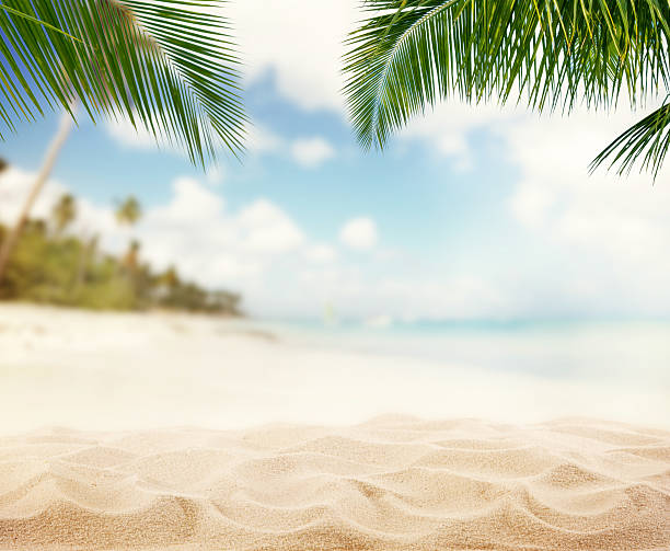 Summer sandy beach with blur ocean on background Summer sandy beach with blur ocean on background. Palm leaves on foreground beach stock pictures, royalty-free photos & images