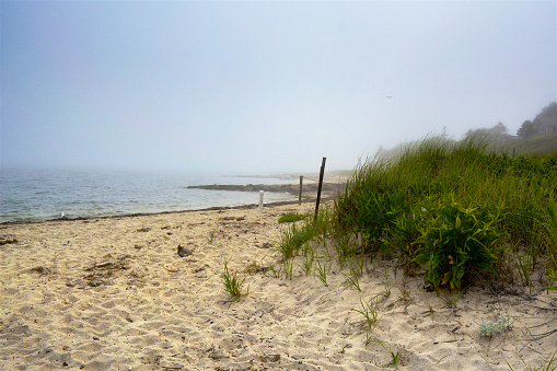 Summer Scene, Low Tide, Grass Plants on Beach at Shoreline, Cape Cod, New England, USA