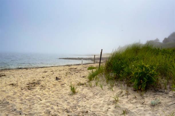 Summer Scene, Low Tide, Grass Plants on Beach at Shoreline, Cape Cod, New England, USA stock photo