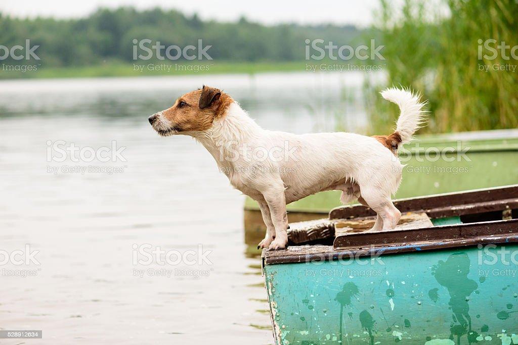 Summer scene: wet dog standing on river boat stock photo