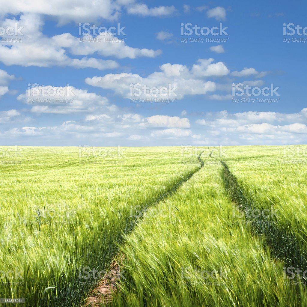 summer scene with field and clouds royalty-free stock photo