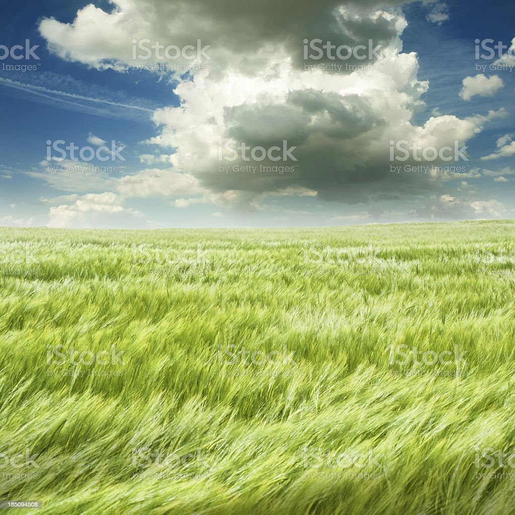 summer scene with field and dark clouds stock photo