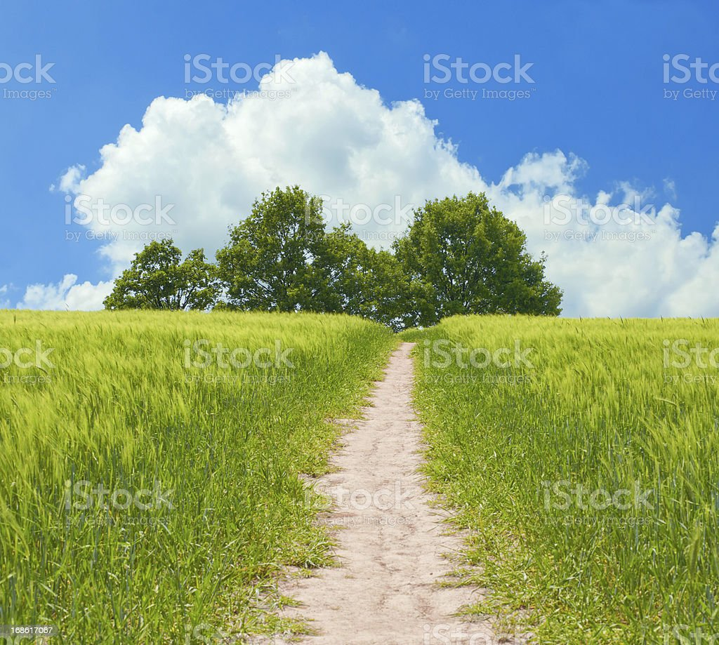 summer scene with field and trees royalty-free stock photo
