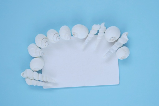 Summer Sea Framewhite Board With White Sea Shells On A Light Blue Background Top View Copy Spacesummer Time Summer Season Stock Photo - Download Image Now