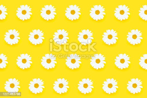 Summer seamless pattern. White daisy flowers on yellow background. Top view, summer flat lay.