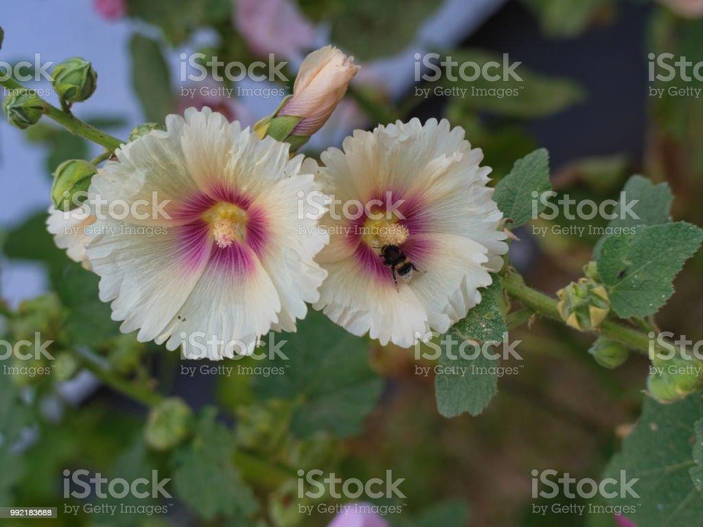 Summer Season Grown Beautiful Wild Flowers Stock Photo More