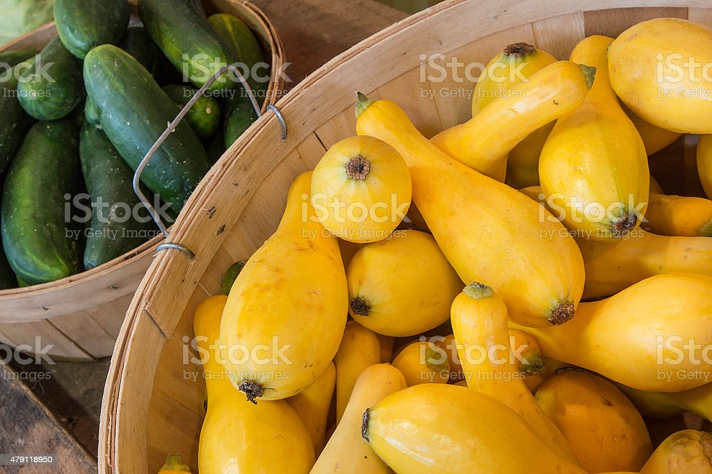 Summer squash in Bin stock photo