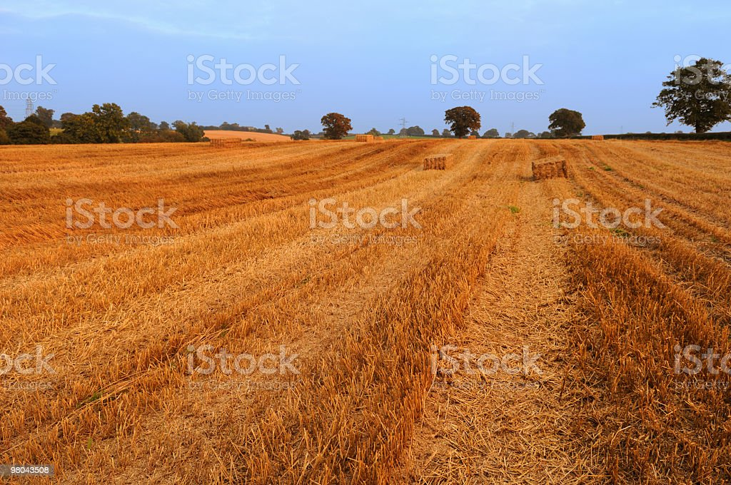 Summer Straw Field royalty-free stock photo