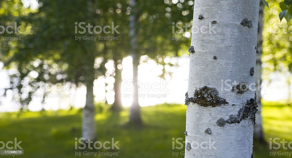 summer sun royalty-free stock photo