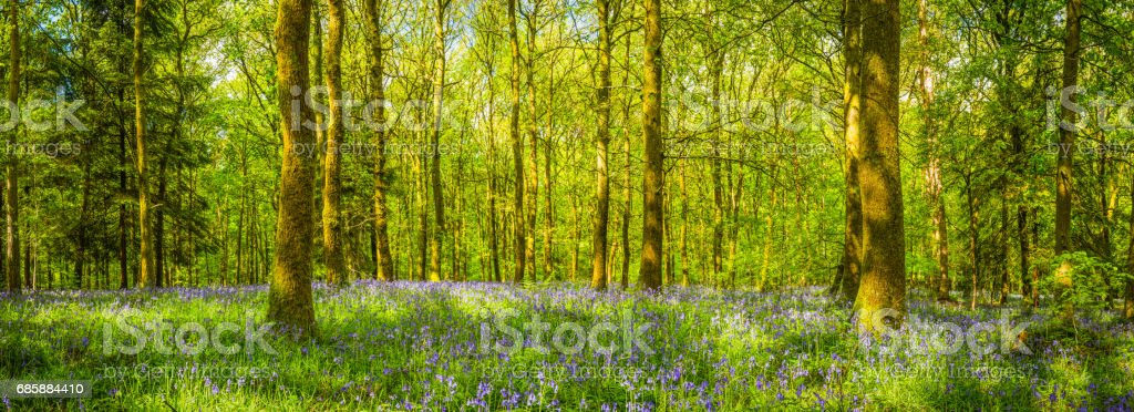 Summer sunlight in idyllic green forest clearing wildflower woodland panorama stock photo