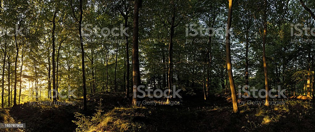 Summer sunrise in idyllic woodland wilderness royalty-free stock photo