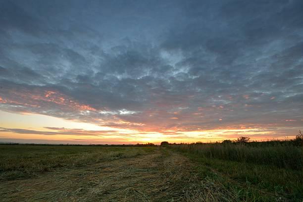 Cтоковое фото Летний рассвет над поле