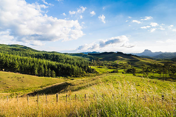 Summer sunset landscape with green hills stock photo