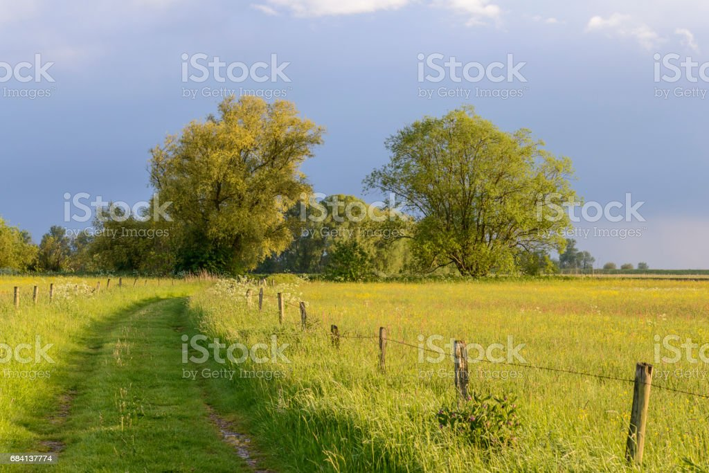Puesta de sol sobre un campo de verano en la naturaleza foto de stock libre de derechos