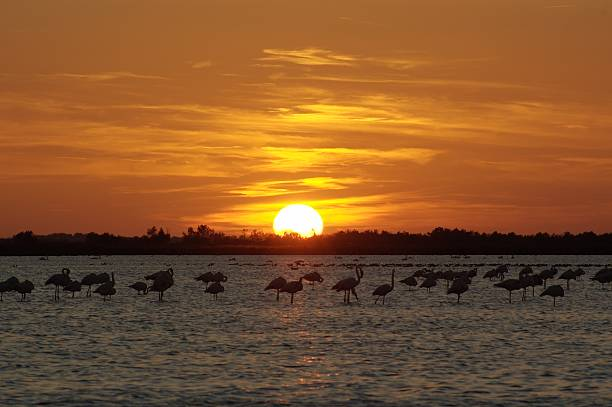 Summer sunset over lake picture id145192004?b=1&k=6&m=145192004&s=612x612&w=0&h=rrpppqx q5fn4drtoicr9iap2wlr 34jvwnnfxop07c=