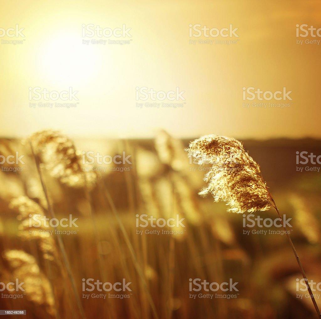 Summer sunset. royalty-free stock photo