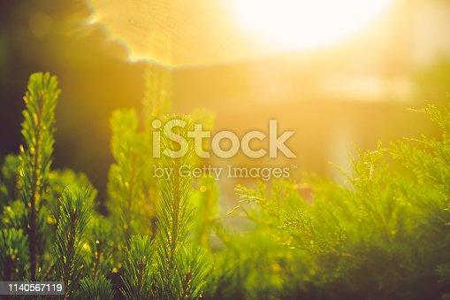 istock Summer sunset through green plants background 1140567119
