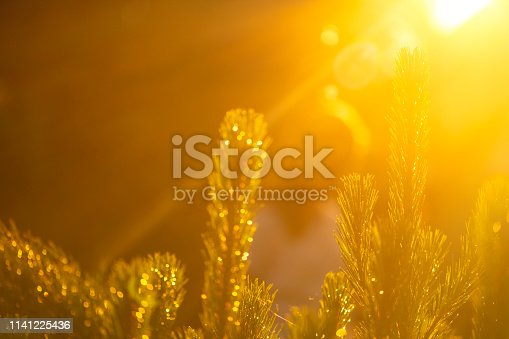 istock Summer sunset through green plants  with girl's silhouette on background 1141225436