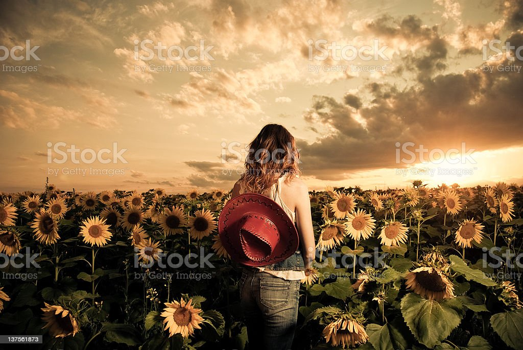 summer sunset view royalty-free stock photo