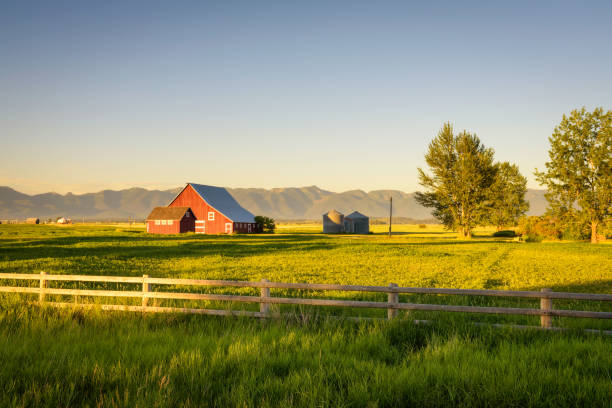 Summer sunset with a red barn in rural Montana and Rocky Mountains Summer sunset with a red barn and silos in rural Montana with Rocky Mountains in the background. ranch stock pictures, royalty-free photos & images