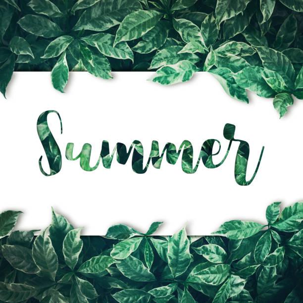 sommer-text mit grünen lässt hintergrunddesign - garden types stock-fotos und bilder
