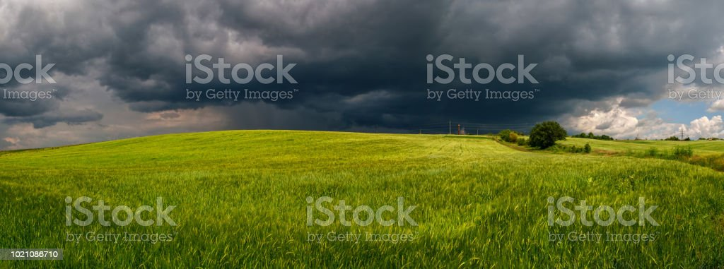 Summer thunderstorm in a wheat field stock photo