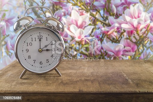 Summer time concept. Old alarm clock against a beautiful blossoming magnolia tree.