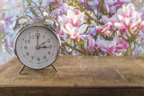 Summer time concept Summer time concept. Old alarm clock against a beautiful blossoming magnolia tree. fresh start morning stock pictures, royalty-free photos & images