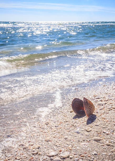 Summer Time Sea Shell on the Beach stock photo