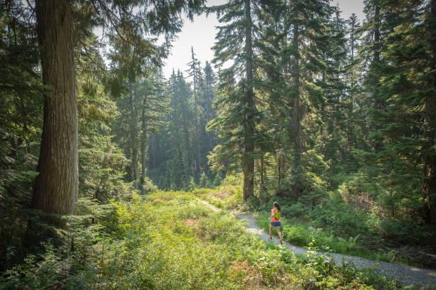 zomer trail running, mount seymour, north vancouver, british columbia, canada - vancouver canada stockfoto's en -beelden