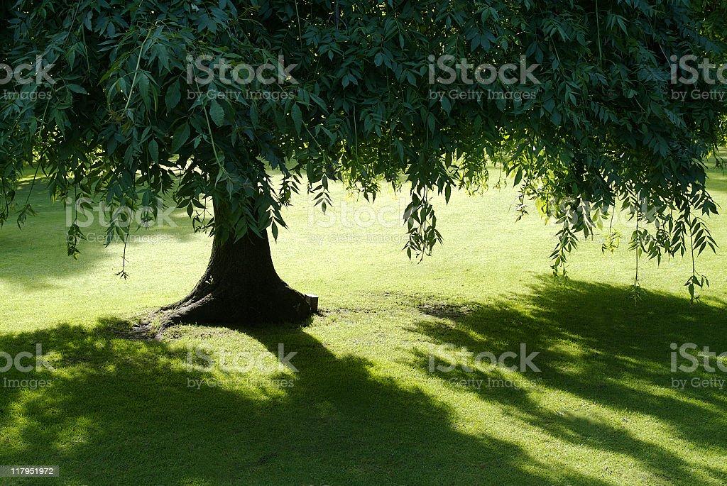 Summer tree royalty-free stock photo